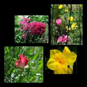 Flowers-p001
