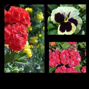 Flowers-p002