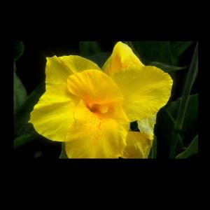 Flowers-p003