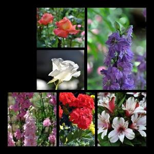 Flowers-p004