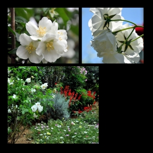 Flowers-p005