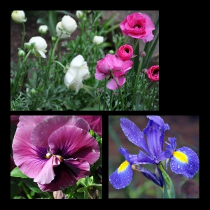 Flowers-p006