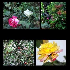 Flowers-p007