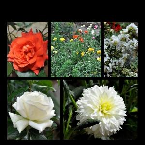 Flowers-p008