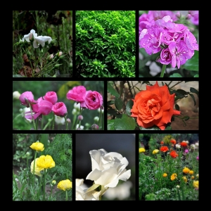 Flowers-p009
