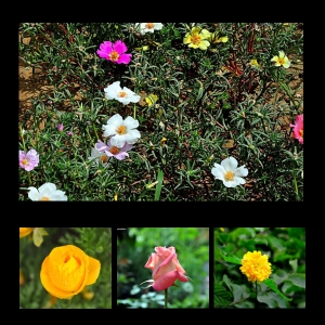 Flowers-p010