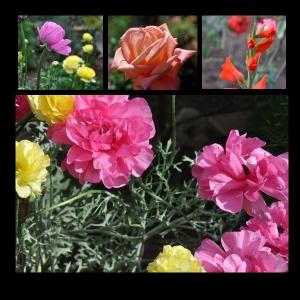Flowers-p011