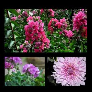 Flowers-p012