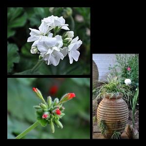 Flowers-p013