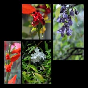 Flowers-p014