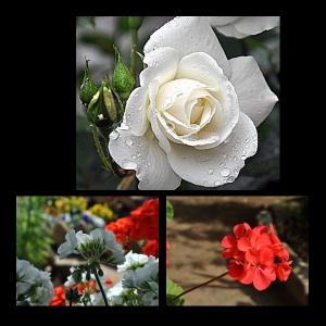 Flowers-p015