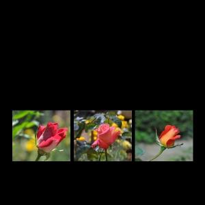 Flowers-p016