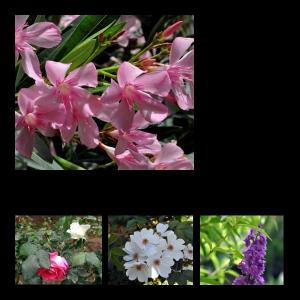 Flowers-p017