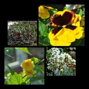 Flowers-p018