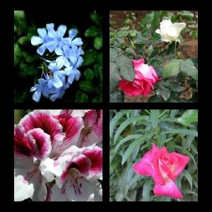 Flowers-p019