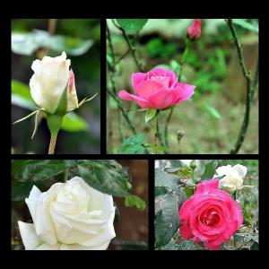 Flowers-p020