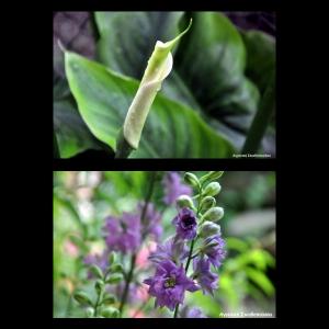 Flowers-p022