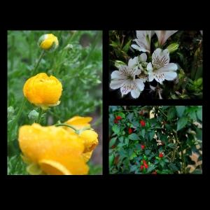 Flowers-p023