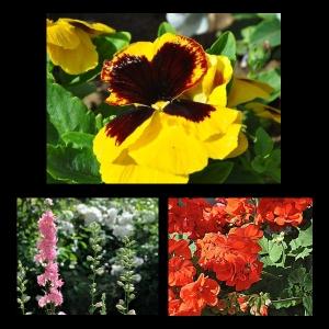 Flowers-p024