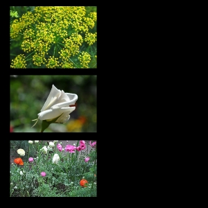 Flowers-p025