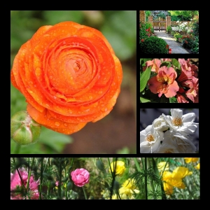 Flowers-p026