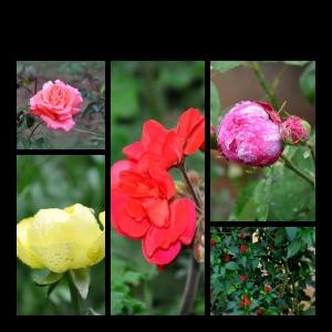 Flowers-p028