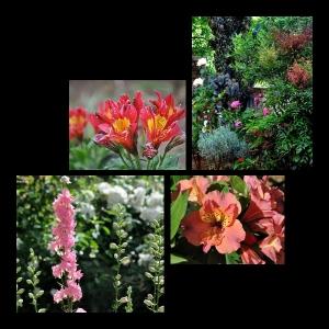 Flowers-p029